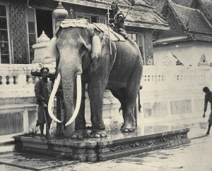 Royal_White_Elephant_at_the_Grand_Palace
